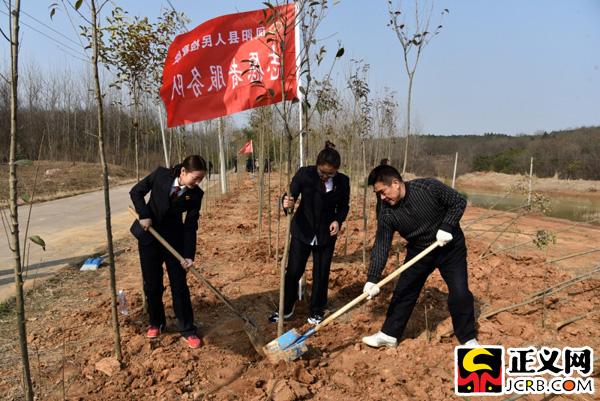 滁州凤阳:开展义务植树活动